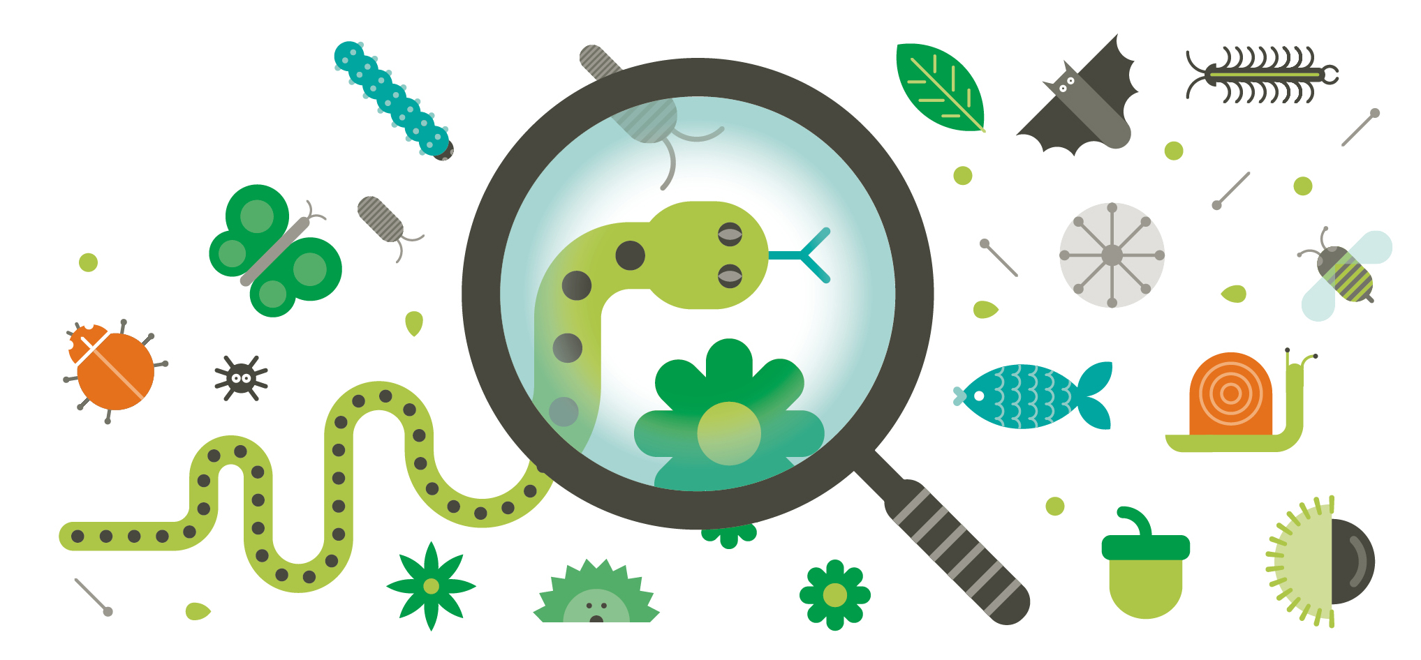 Graphic of a magnifying glass looking at insects